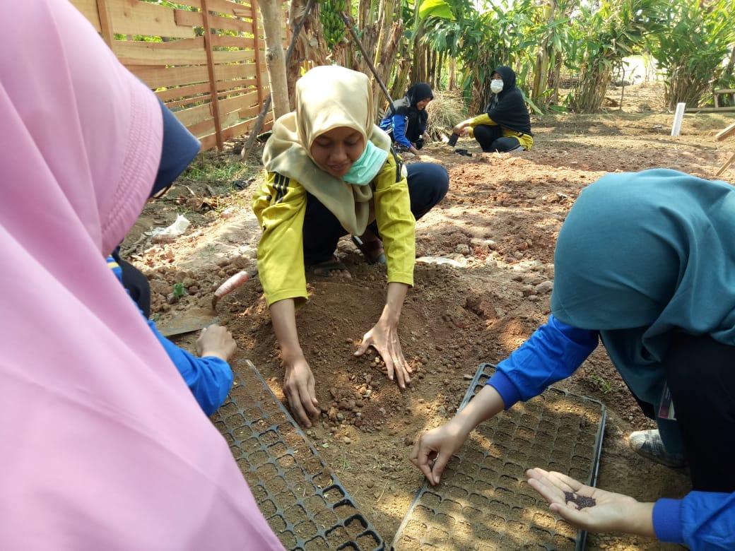 UMPP Fasilitasi Pengolahan Sampah Organik